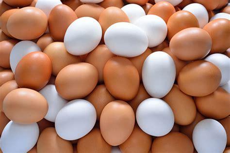 imagenes de huevo zen 191 cu 225 ntos huevos podemos comer al d 237 a no lo sab 237 a