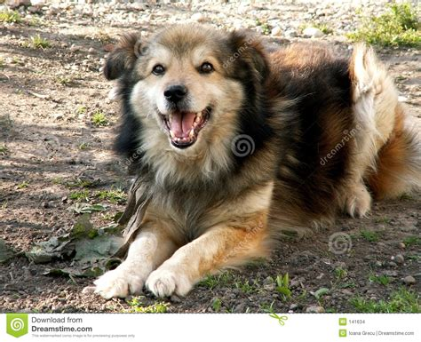 laughing puppy laughing stock images image 141634