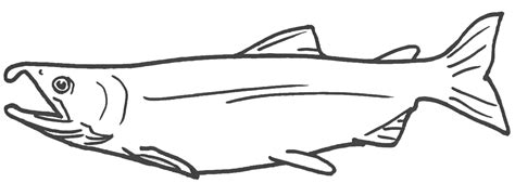 free coloring pages of salmon fish