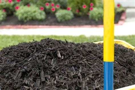mulch beautify your gardens with a rich nourishing blanket of mulch ducks n a row
