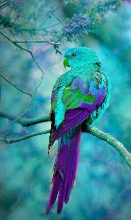 27 beautiful and colorful bird types from around the