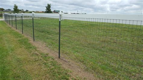 Backyard Chickens Electric Fence High Tensile Electric Fence
