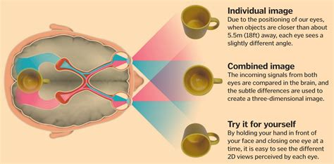 how does a see science of vision how do our enable us to see how it works magazine