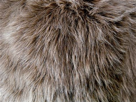 Faux Fur by 30 Awesome Fur Texture Showcase Streetsmash