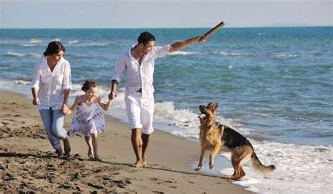 puppies for adoption hawaii hawaii pet adoptions