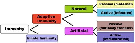 immune system flowchart flowchart of immune response create a flowchart
