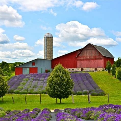 when is lavender in season in michigan lavender hill farms in boyne city mi