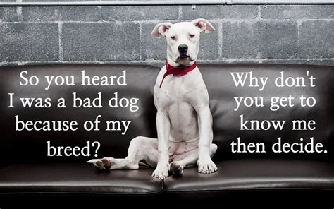 So Much For That Rumor Hollyscoop by Best 25 Pit Bull Quotes Ideas On Pitbull