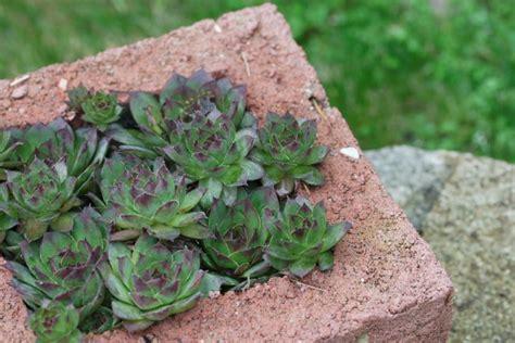 Hypertufa Planters How To Make by How To Make Hypertufa Planters