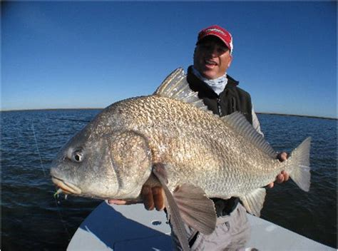 sheepshead catching advice     page  iboats boating forums