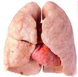 what color is blood before oxygen hits it what do lungs after quitting look like new