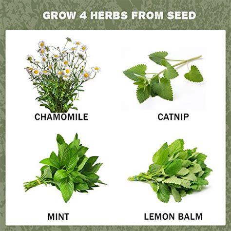 growing herbs indoors from seeds grow 4 herbal tea plants from seed indoor herb garden