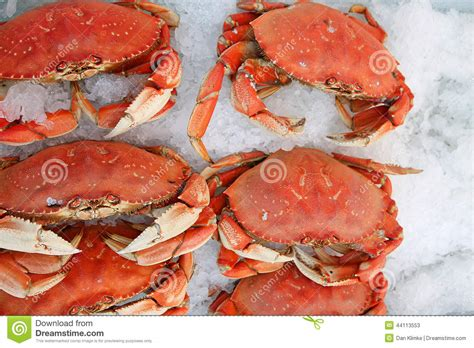 To Market Crab Tools by Crab On At Farmers Market Stock Photo Image 44113553