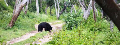 bandipur national park  time  visit entry fees