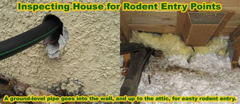 best poison for mice in attic rat removal from house attic ceiling wall building