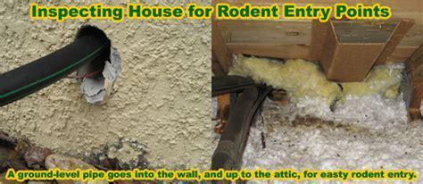 How to Get Rid of Rats   Solve a Rat Problem