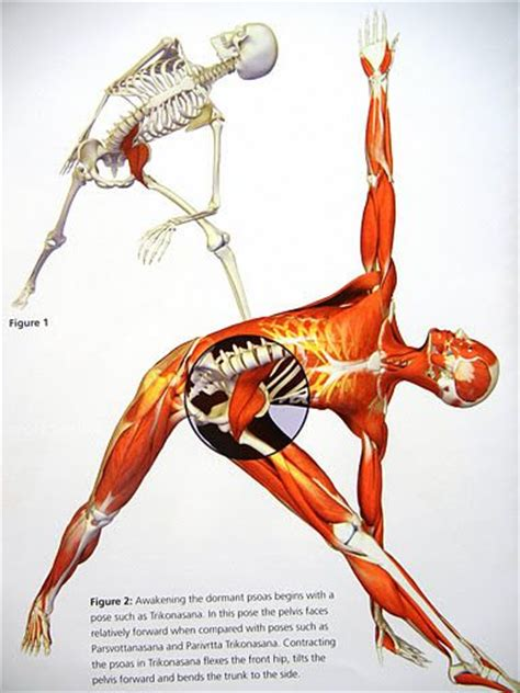 Does Massaging Your Muscles Help Detox by 238 Best Images About Pelvic Girdle Treatment On