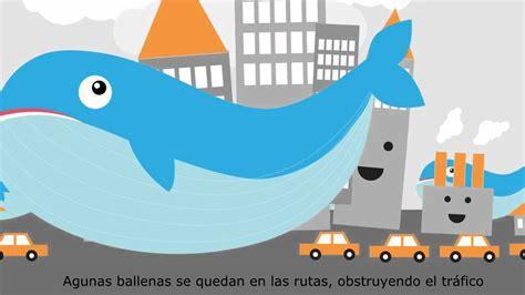 ballenas animadas confundido sobre la inudaci 243 n las ballenas lo ayudan