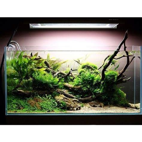 Top Aqua Clear Aquarium 60cm 190 best aquascaping images on fish aquariums