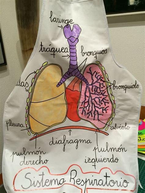 molde para hacer sistema respiratorio con foamy las 25 mejores ideas sobre sistema respiratorio en