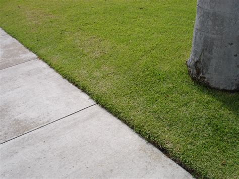 sidewalk landscaping curbside easements ideas tips install it direct