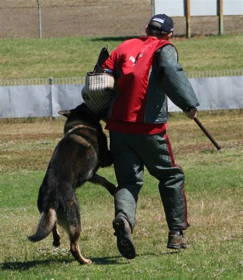 best attack dogs protection dogs for families the five best guard dogs to own