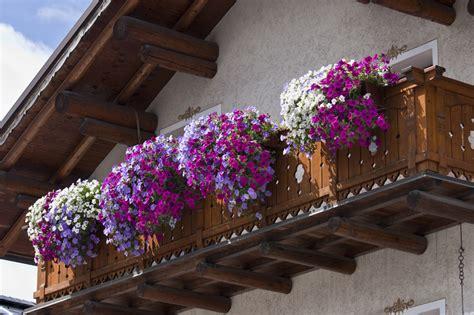 balcony flowers classical model balcony of violet flowers luxury