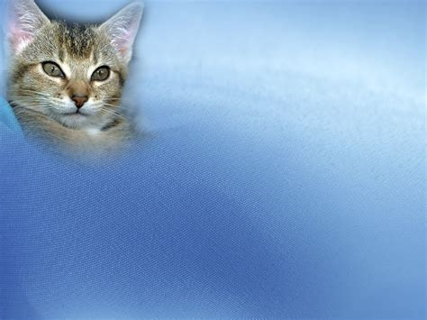 Free Animal Pets Cat Backgrounds For Powerpoint Animal Cat Powerpoint Template