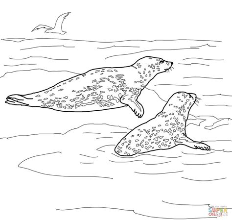 two leopard seals coloring page free printable coloring