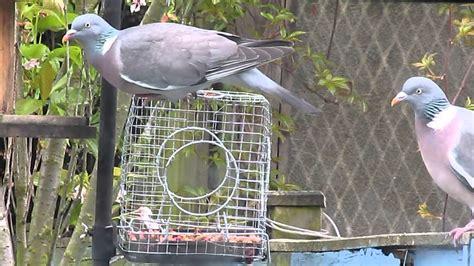 how to keep pigeons bird feeder unique bird feeder