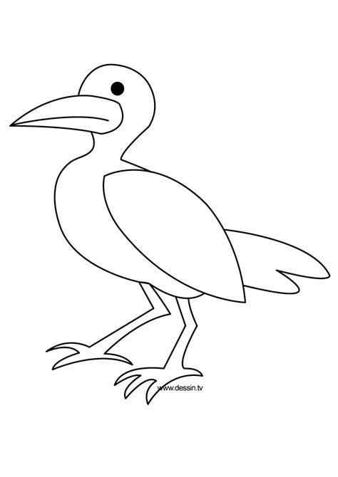 sea birds coloring pages how to draw sea birds