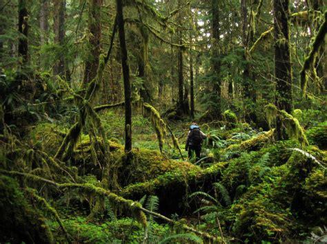 Manohara Original By Isrin Isran file olympic rainforest hiker jpg wikimedia commons
