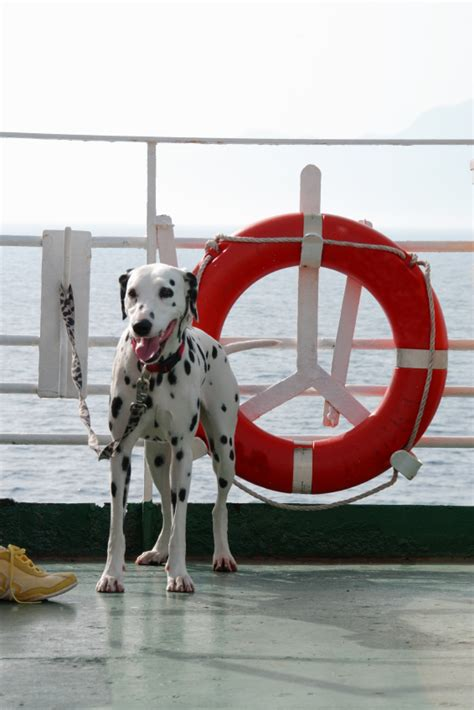 how to ship a puppy dogtravel company friendly cruise ship service