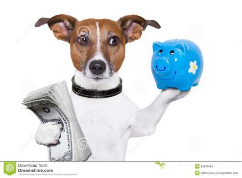 finance dogs money saving stock photo image of holding finance 29347984