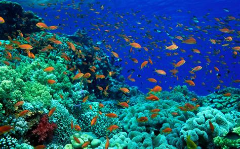 fish pictures ocean wallpapers chapter 1 hd animal