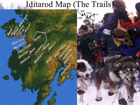 how do mushers their dogs for the iditarod iditarod