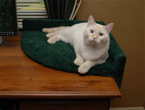 best cat beds luxury cat beds for all price ranges