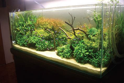 gambar desain aquascape aquascape bisa hilangkan stress ikan hias cupang