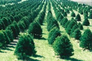 file christmas tree farm ia jpg wikipedia