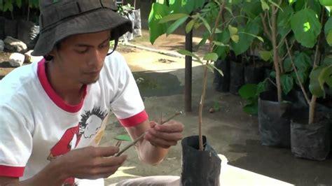 memperbanyak tanaman okulasi youtube