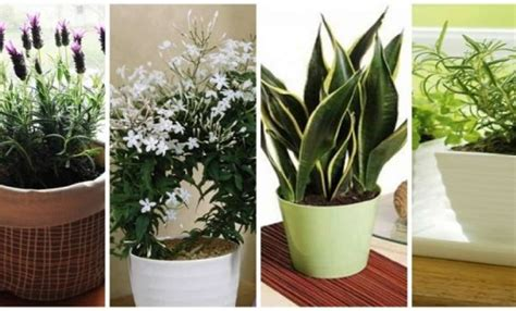 10 plants you should have in your bedroom for a better