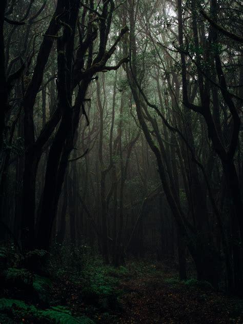 foto stok gratis tentang alam berkabut cahaya