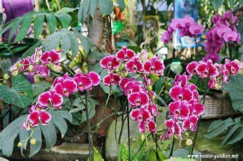 mille et une orchid 233 es jardin des plantes