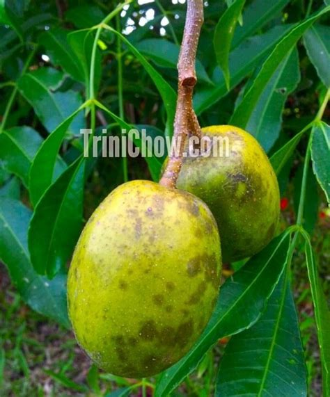 c fruit toronto pommecythere fruits and vegetables of tobago