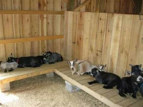 Small Dairy Goat Barn Plans 237 Best Images About Goats Llamas Alpacas And Sheep