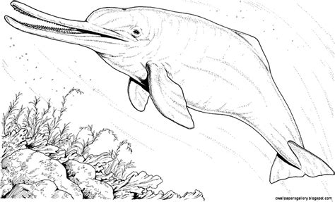 amazon river dolphin drawing wallpapers gallery