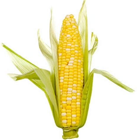 is corn bad for dogs is corn a bad ingredient in food news from petfood direct