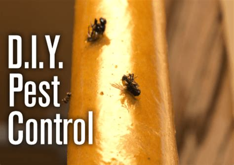 do it yourself pest control bed bugs diy pest removal do they really work alpha ecological