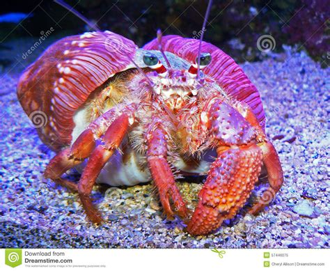 crab colors colorful crab stock photo image 57446075