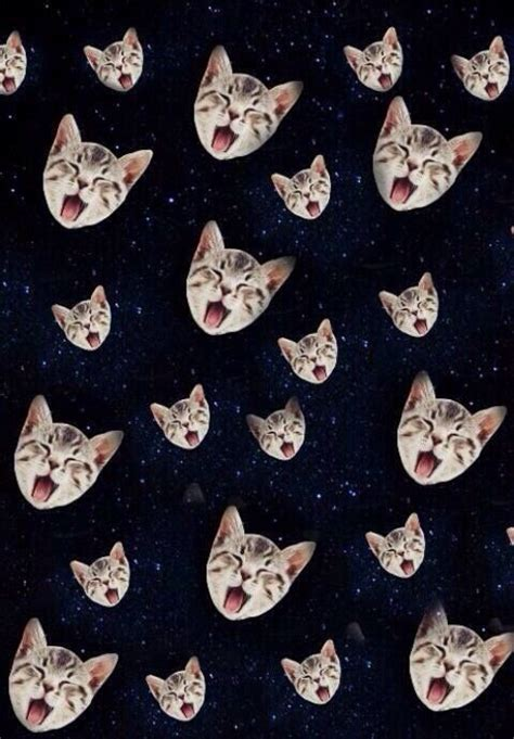 cat wallpaper we heart it 79 best images about phone backgrounds on pinterest